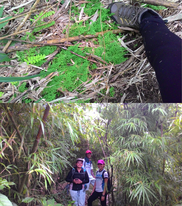 Lots of flora surrounding the hikers