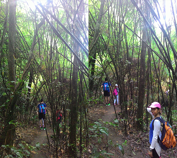 Bamboo territory means you're near the campsite