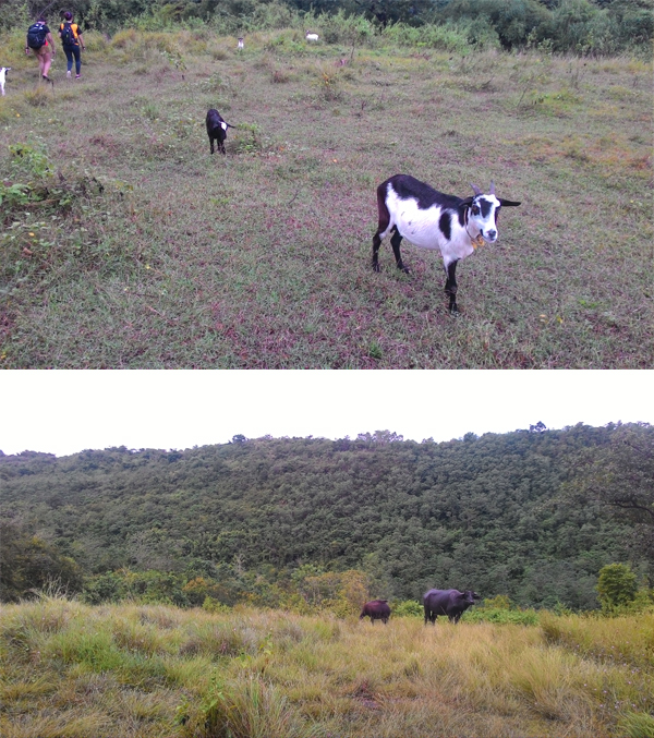 The fauna along the foresty trail to Mt. Manalmon's summit