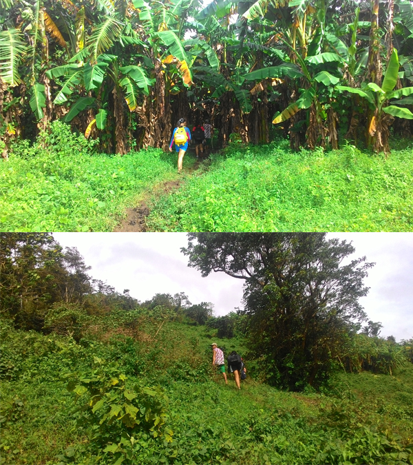 Most of the mountain is used as a plantation for bananas and other foods, so the trail is well trodden and the soil is soft