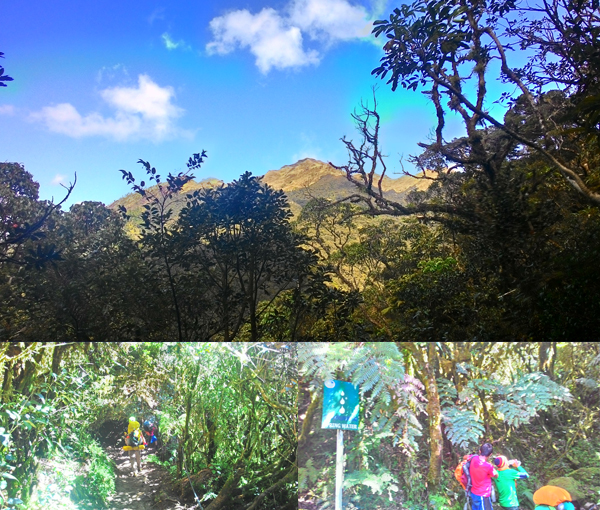 The view of Pulag from Ambangeg; trees everywhere, straight to where we bought iced buko
