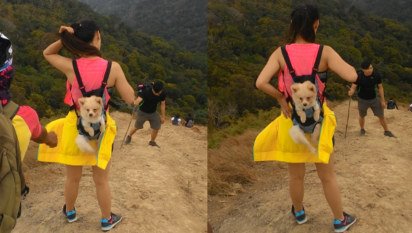 Cute doggy at the summit