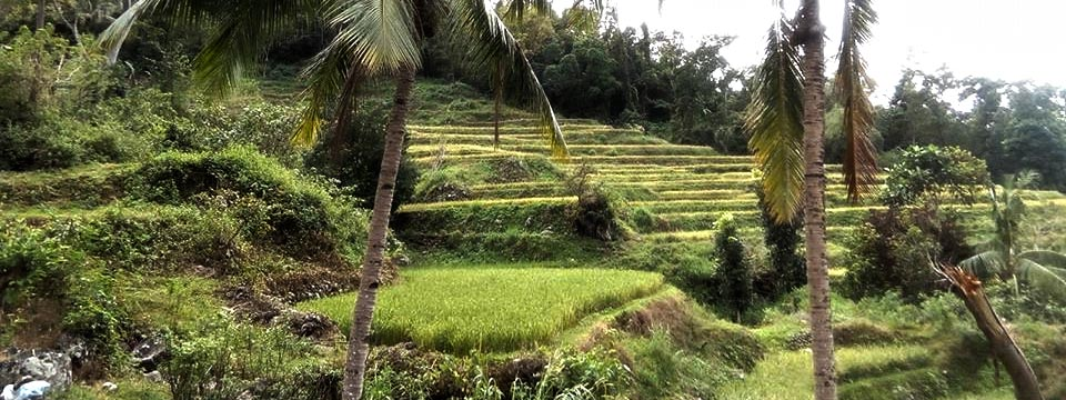 Some rice terraces near the residential areas